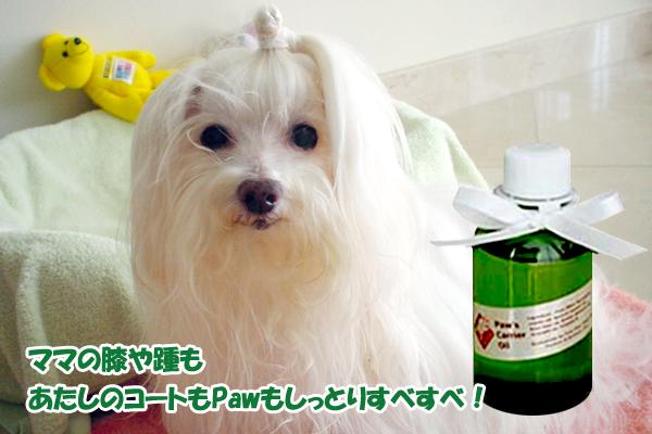 carrieroil-chuchu-2005-101005.jpg