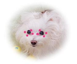 chuchu-eyewash-1.jpg