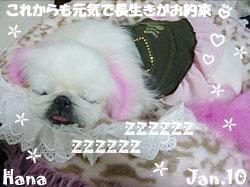 hana-011710.jpg