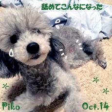 pico-102814.jpg