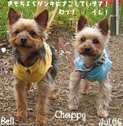bell-chappy-eyewash.jpg