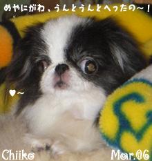 chiiko-eyewash-032806.jpg