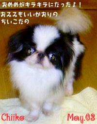 chiiko-eyewash.jpg