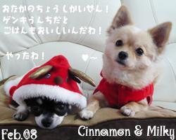 cinnamon-milky-020508.jpg