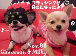 cinnamon-milky-111108.jpg