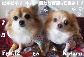 ea-kota-022212.jpg