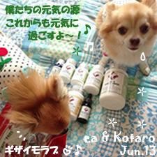 ea-kota-062913-2.jpg