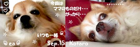 ea-kota-090915.jpg