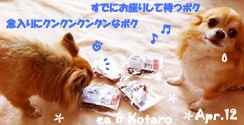 ea_kota-042912.jpg