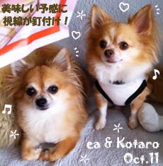 ea-kotaro-100411-1.jpg
