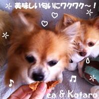 ea-kotaro-100411-2.jpg
