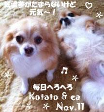 ea-kotaro-110311.jpg
