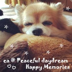 ea-snaggle_puppy.jpg