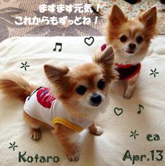 ea_kota-041913.jpg