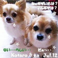 ea_kota-070412.jpg