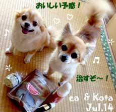 ea_kota-072514.jpg
