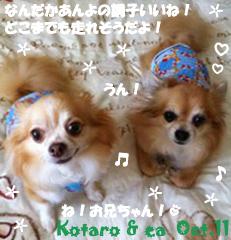 ea_kotaro-101111.jpg