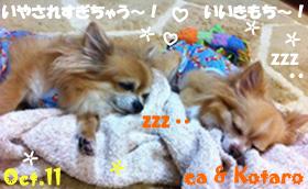ea_kotaro-102011.jpg