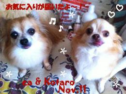 ea_kotaro-111711.jpg