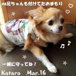 kotaro-030816-1.jpg