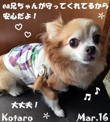 kotaro-030816-2.jpg
