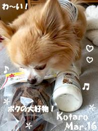 kotaro-031416-1.jpg