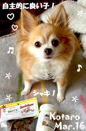 kotaro-031416-2.jpg