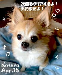 kotaro-041818-1.jpg