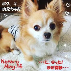kotaro-051716.jpg