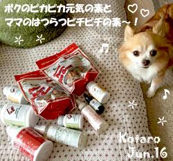 kotaro-060416.jpg