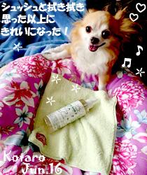 kotaro-060516.jpg