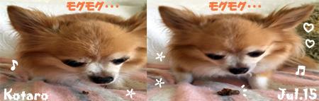 kotaro-071515-3.jpg