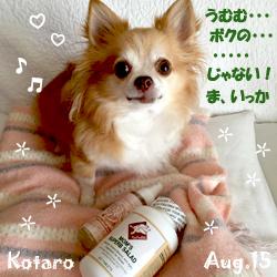 kotaro-080315.jpg