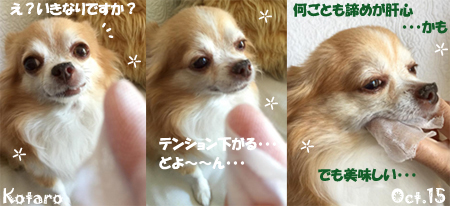 kotaro-100715-3.jpg