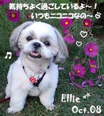 ellie-100508-2.jpg