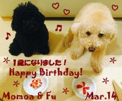 fu-momoa-031514.jpg