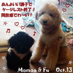 fu-momoa-101413.jpg