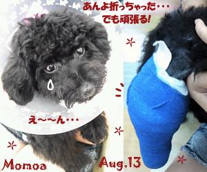 momoa-081813.jpg
