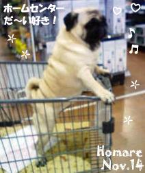homare-112414-homecenter.jpg