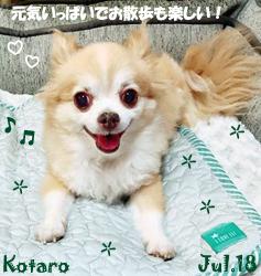 kotaro-072518.jpg