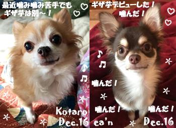 kotaro_ean-121016.jpg