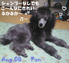 pon-083108.jpg