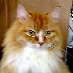 maron_cat-menu.jpg