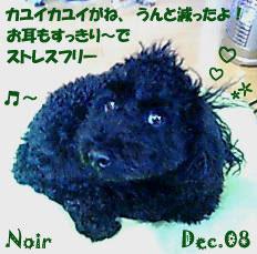 noir-120708-1.jpg