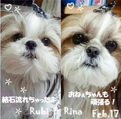 rina_rubi-022517.jpg