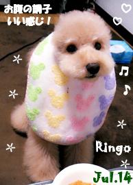 ringo-071414-2.jpg