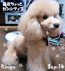 ringo-090514.jpg