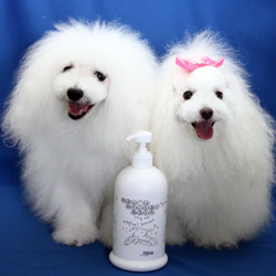 ryu_moe-shampoo-menu.jpg