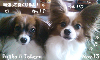 takeru_fujiko-112613.jpg