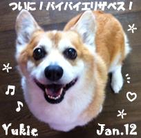 yukie-011212-1.jpg